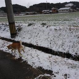画像 夜でも雪を食べる犬 の記事より 2つ目