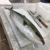 魚教室⑦ヤズ/基本は道具のお手入れの画像