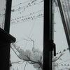 大雪とすずめの画像