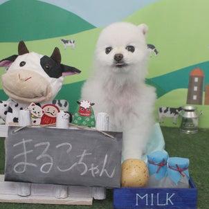 Petit♡dog~1/9本日のお友達~の画像
