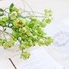 爽やかなグリーンのバラ!エクレール♪の画像