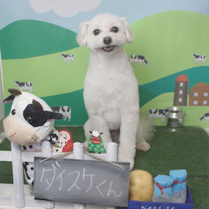 Petit♡dog~1/10本日のお友達~の画像