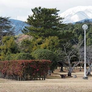 美濃国分寺跡と山茶花(2021年1月9日撮影)の画像