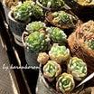 多肉植物の植え替えを( ˊ̱˂˃ˋ̱ )