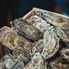 厚岸の牡蠣の美味しさの秘密についての画像