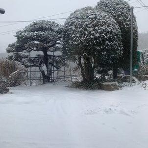 雪降りの画像