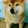 マルワジム横浜 マルワジム横浜閉館しました ブログも最終回の画像