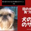 目の大きさで気づける!|犬の痛みのサイン#1の画像