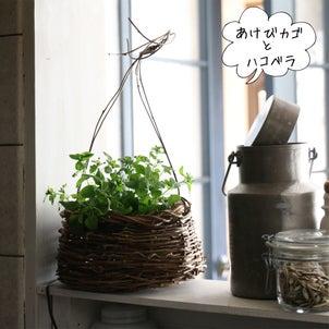 雑草(ハコベ)をインテリアグリーンにの画像