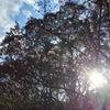 1/13開催!ZOOMワークショップ「天照大御神さまと繋がろう(能力開発付き)」のご案内の画像