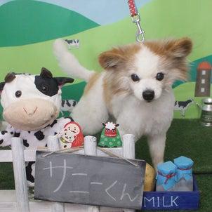Petit♡dog~1/14本日のお友達~の画像