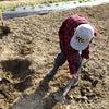 【1/4~1/9】大根収穫の時期です!今年も皆のおかげで立派な大根が出来ました!の画像
