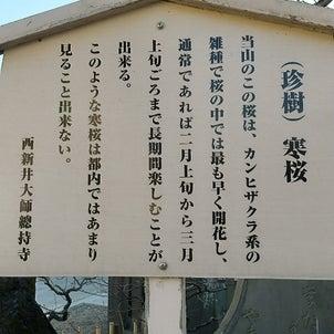 西新井大師への画像
