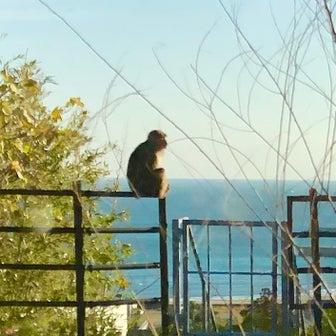 こんな時にサーフショップを開業して大丈夫なの〜南国宮崎の青島ではお猿さんも波チェックしてる〜♪