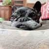 初めての介護で愛犬との共同作業に幸せがありました!の画像
