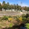 千里川沿いオンロードラン 10kmの画像