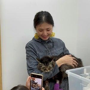 猫の延命治療の画像