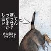 しっぽが曲がっていませんか?|犬の痛みのサイン#3の画像