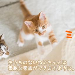 画像 ❤︎10/24(日)譲渡会のご報告❤︎ の記事より 10つ目