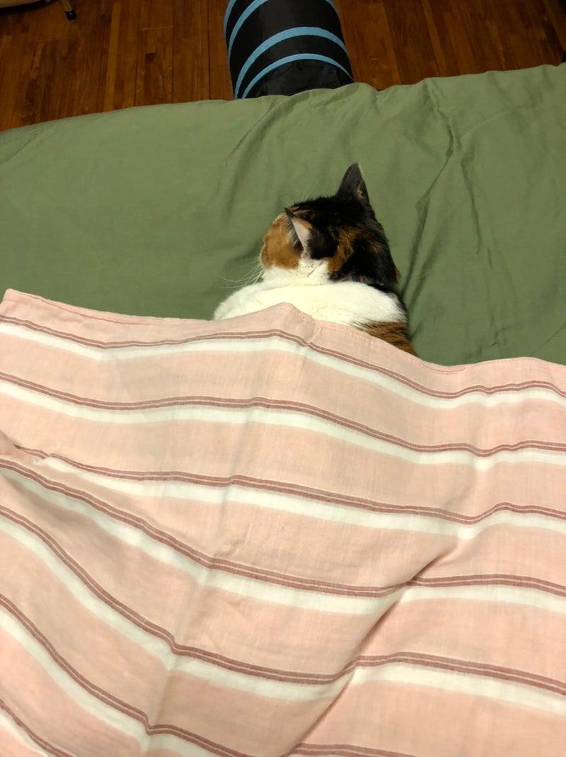 エリザベス、看板ネコ