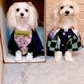 【ペット コスプレ】禰豆子と炭治郎 - 犬服 ペット服