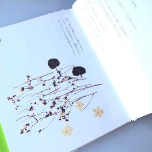 のちのおもひに…花と言葉の詩画集2立原道造 ポプラ社刊よりの画像
