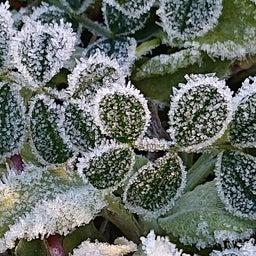 画像 キレイな霜✨ の記事より 4つ目