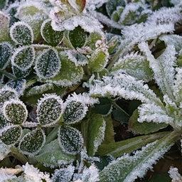 画像 キレイな霜✨ の記事より 3つ目