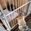 1月20日 マリ無事犬舎で