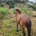 久米島馬牧場日記