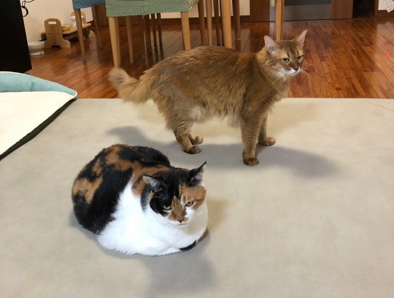 ウリ、エリザベス、看板ネコ