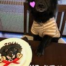 クロ、HAPPY BIRTHDAY★の記事より