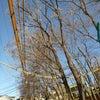 電線⚡電線⚡電線⚡の画像