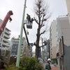 街路樹伐採の画像