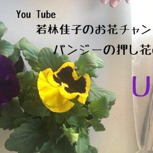 【動画レッスン】パンジーの押し花の作り方の画像