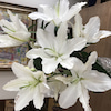 季節の花とFactfulnessの画像