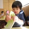 1月の食育活動 白菜ちぎりの画像