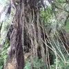 沖縄のユタ(霊能者)その3 私の鑑定結果の画像