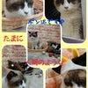 ☆子猫の部屋☆の画像