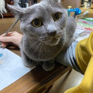 猫 と 私 の 庭 ブログ