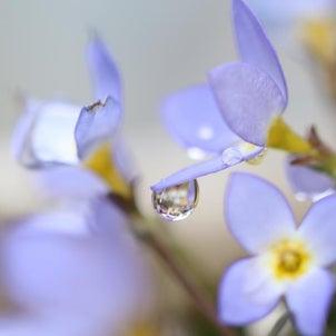雨のち晴れ!庭花ちゃん♪の画像
