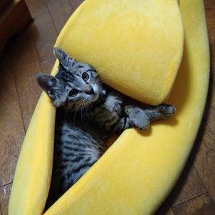 なんと、バナナ!の画像