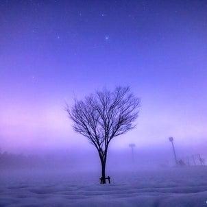 ️霧の雪原と樹木️2021.1.15/福井県永平寺町【五角星!合格星?を探してみよう...の画像