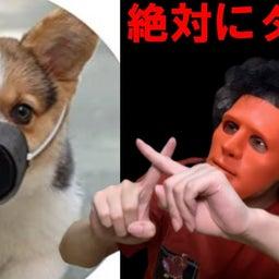 画像 【衝撃】コロナ対策で「犬用マスク」が販売中…!? の記事より