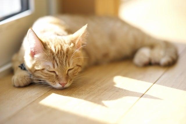 日向ぼっこするマイペースな猫