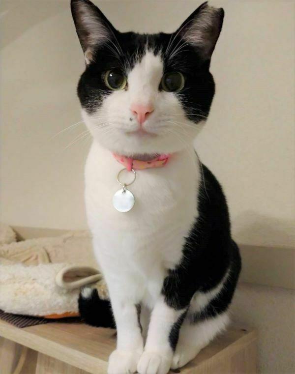 白黒猫のもんろーさんの画像
