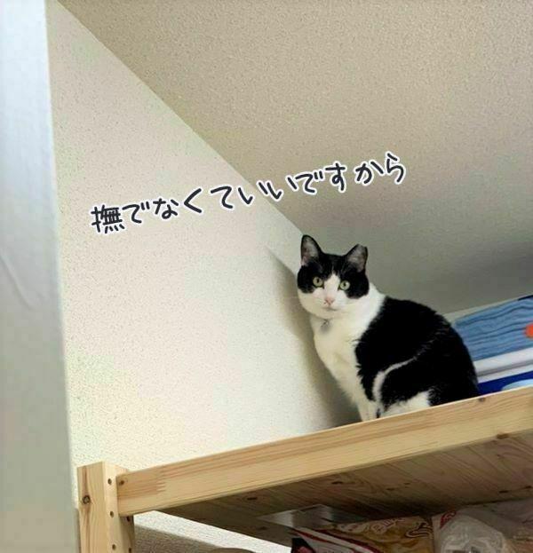 キッチンの棚の上のモンローさんの画像