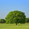 木の幹のようにそして枝葉のようにの画像