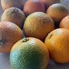 橙で白ポン酢の画像