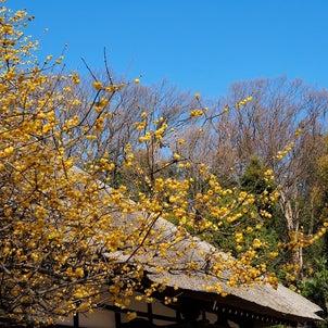 今日は立春の画像